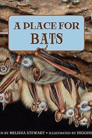 PLACE FOR BATS